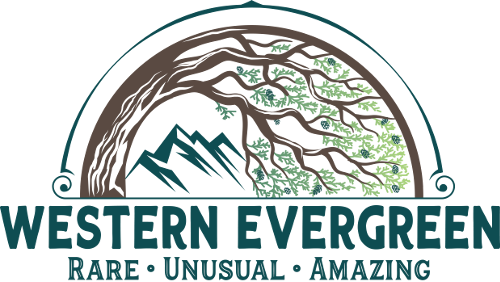 Western Evergreen Logo